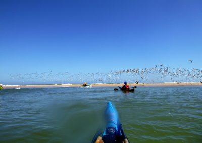big flock of birds on sandbar matanzas inlet