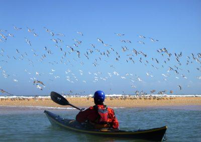 flock of birds in front of kayaker