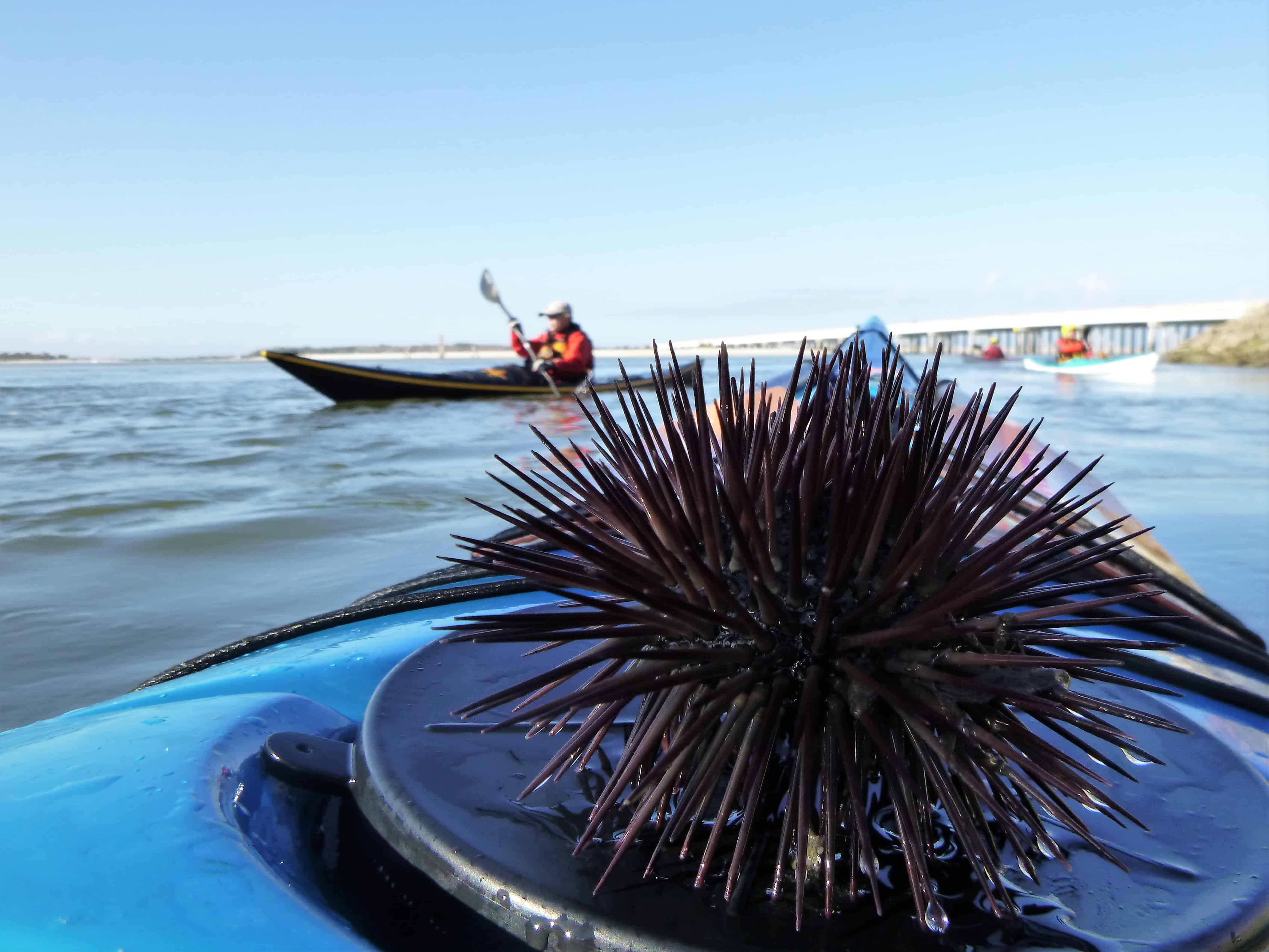 Florida Sea Kayaking Skills Course ~