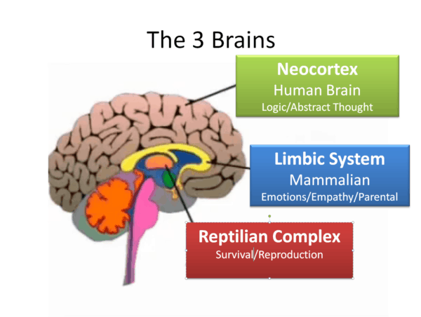 depiction of the three brains of humans